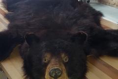Bear-Skin-Rug